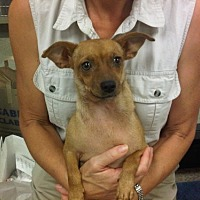 Adopt A Pet :: Kahlua - Fresno, CA