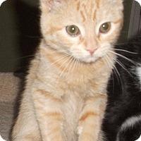 Adopt A Pet :: Ty-Adoption Pending! - Colmar, PA
