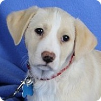 Adopt A Pet :: Reba - Minneapolis, MN