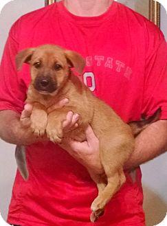 Dog Training Lakewood Ohio