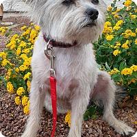Adopt A Pet :: Cody - Las Vegas, NV