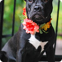 Adopt A Pet :: Moonpie - Baton Rouge, LA
