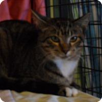 Adopt A Pet :: Natasha - St. Louis, MO