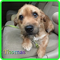 Adopt A Pet :: Thomas - Hollywood, FL