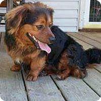 Adopt A Pet :: King - Hanover, PA