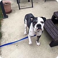 Adopt A Pet :: Henry - Columbus, OH
