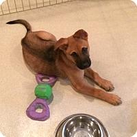 Adopt A Pet :: Soldier - Rockaway, NJ