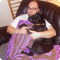 Adopt A Pet :: FOUND Needs Home - Alliance, OH