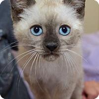 Adopt A Pet :: Herman - Davis, CA