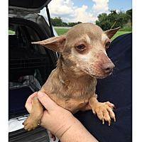 Adopt A Pet :: POKEMON - LaGrange, KY