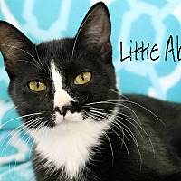 Adopt A Pet :: Little Abby - Wichita Falls, TX