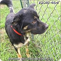 Adopt A Pet :: Buster - Bonham, TX