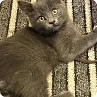Adopt A Pet :: Cubby - Jackson, NJ