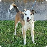 Adopt A Pet :: Nina - Maquoketa, IA