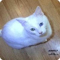 Adopt A Pet :: KITTY - Hanford, CA