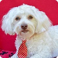 Adopt A Pet :: Foozy - Irvine, CA