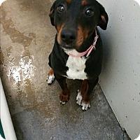 Adopt A Pet :: Lucy - Chippewa Falls, WI