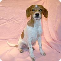 Adopt A Pet :: 17-d01-029 Wyatt - Fayetteville, TN