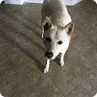 Adopt A Pet :: Jinro - Las Vegas, NV