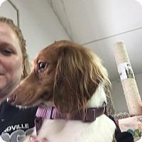 Adopt A Pet :: Reese - Woonsocket, RI