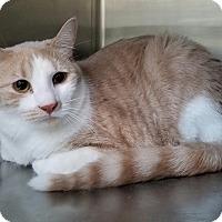 Adopt A Pet :: England - Elyria, OH