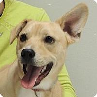 Adopt A Pet :: Sunny - Horn Lake, MS