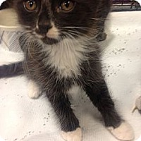 Adopt A Pet :: Kitten #1-4 - Woodstock, GA