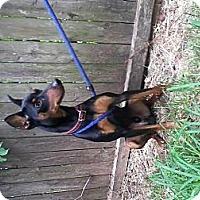 Adopt A Pet :: Lex - Garwood, NJ