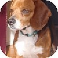 Adopt A Pet :: Milo - Novi, MI