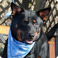 Adopt A Pet :: Cyd-PENDING - Garfield Heights, OH