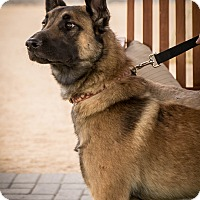 Adopt A Pet :: Klaus - Phoenix, AZ