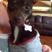 Adopt A Pet :: Tickles - Katy, TX