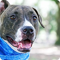 Adopt A Pet :: Klaus - Odessa, FL