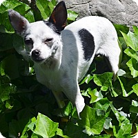 Adopt A Pet :: Tanka - Bridgeton, MO