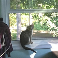 Adopt A Pet :: Marley - Dale City, VA