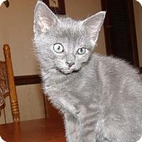 Adopt A Pet :: JASPER - Acme, PA