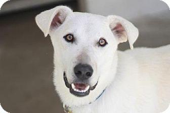German Shepherd Dog/Shepherd (Unknown Type) Mix Dog for adoption in Kyle, Texas - MUSHU