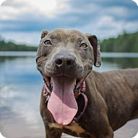 Adopt A Pet :: Grady - Bergen County, NJ