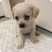 Adopt A Pet :: Berry - Brea, CA