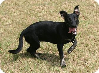 Basset Hound/German Shepherd Dog Mix Dog for adoption in Lufkin, Texas - Pearl