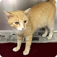 Adopt A Pet :: Linus - North Wilkesboro, NC