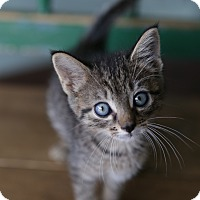 Adopt A Pet :: Kendall - San Antonio, TX
