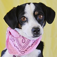 Adopt A Pet :: Princess Leaha - Littlerock, CA