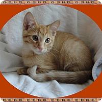 Adopt A Pet :: Elwood - Mt. Prospect, IL