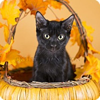 Adopt A Pet :: Truffel - Oviedo, FL