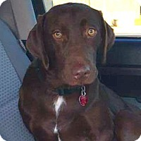 Adopt A Pet :: COME MEET Tank - Westport, CT