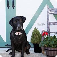 Adopt A Pet :: Libby - Charlotte, NC