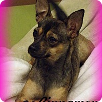 Adopt A Pet :: Cinnamon - Anaheim Hills, CA