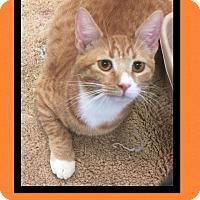 Adopt A Pet :: Bonkers - Scottsdale, AZ