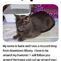 Adopt A Pet :: Susie - Albany, NY